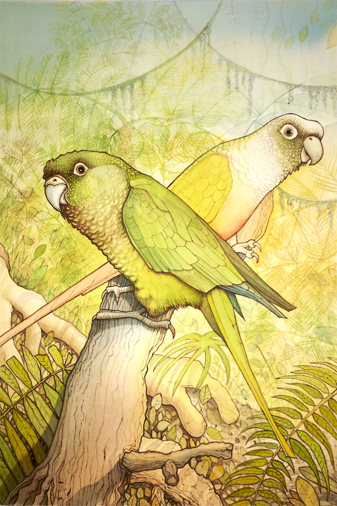 Watercolour Illustration of Parrots